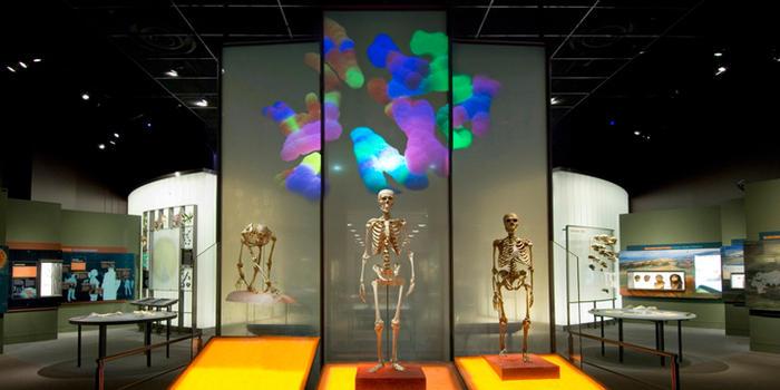 hall-of-human-origins_dynamic_lead_slide